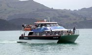 Black Cat tours, Akaroa harbour